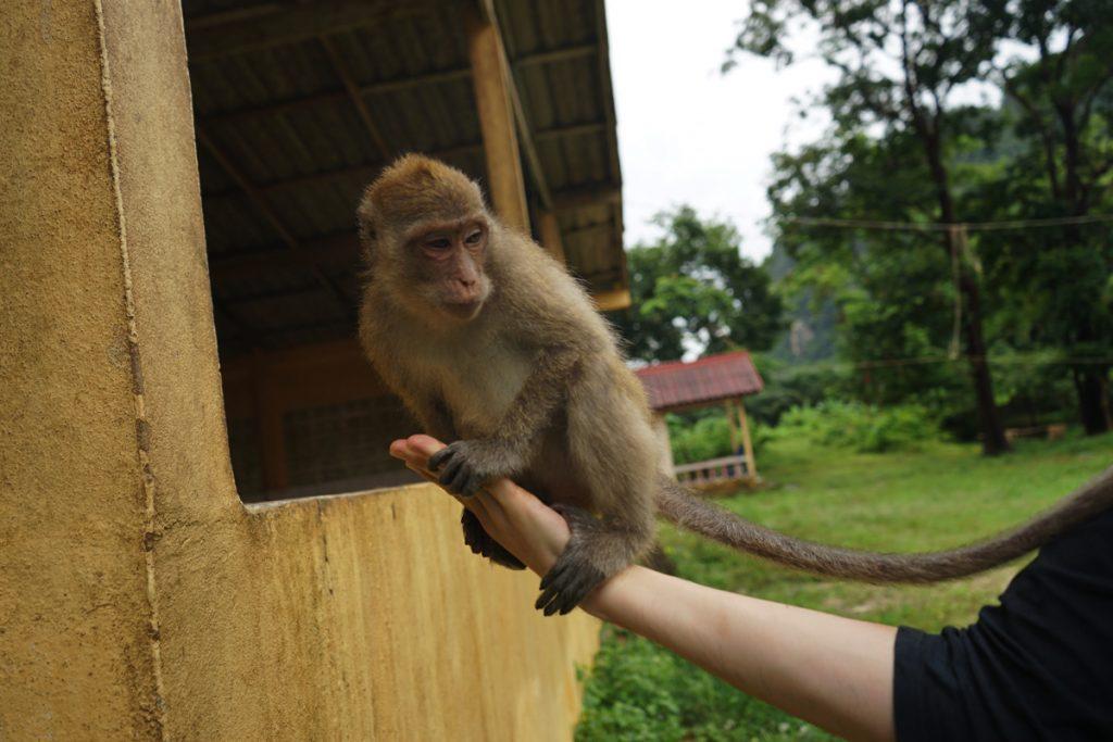 モンキーテンプル:手乗り猿