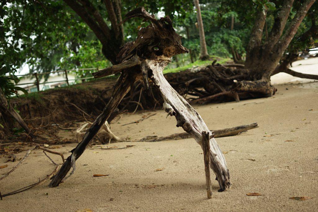 カオラック旅行記:サロジンの流木